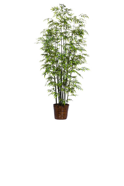 9.5' DELUXE GREEN BAMBOO/BASKET