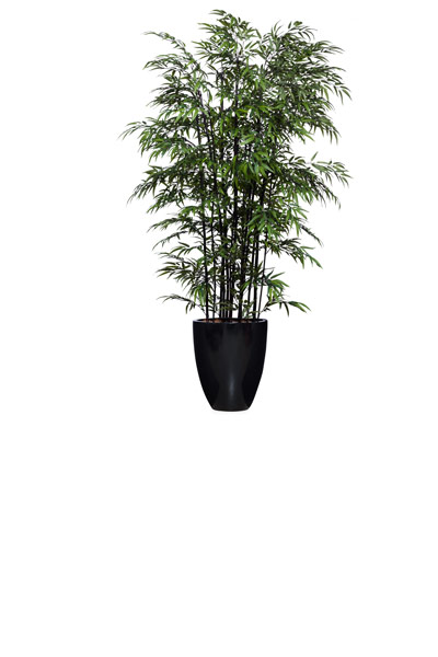 8' DOUBLE BLACK BAMBOO IN BLACK POT