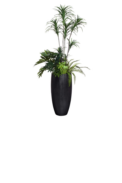 LRG DRACENA/SELLOUM/SUCCULENT COMBINATION IN BLACK POT