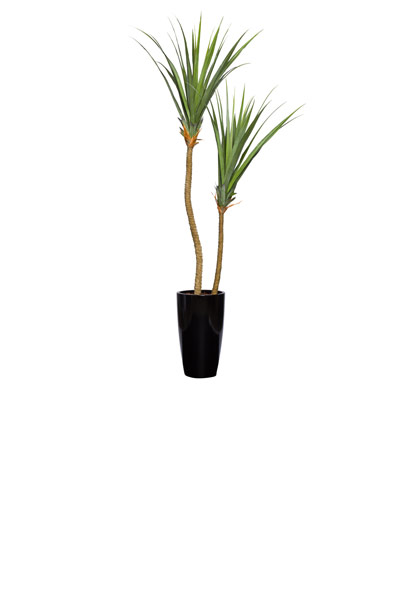 PANDANUS X 2 IN TALL TAPPERED BLACK POT