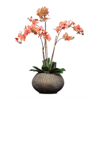 Coral Phal in Turban Bowl