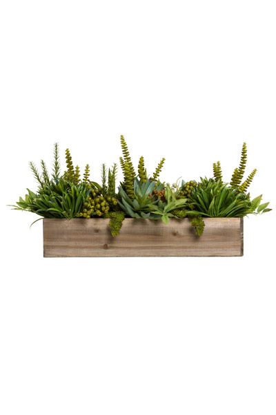 ASST GRASS/SUCCULENT IN WOOD BOX