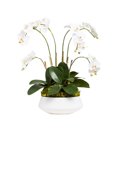 WHITE PHALS IN WHITE POT