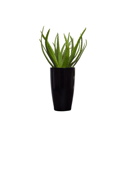** Aloe in Tall Black Round Planter