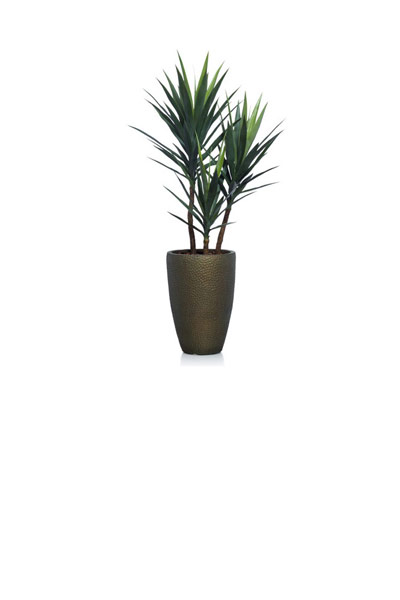 ( OUT OF STOCK. ETA JUNE 2019 ) 5' YUCCA IN SMALL BRONZE POT