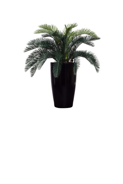 CYCAS IN BLACK SHINY TAPPERED POT