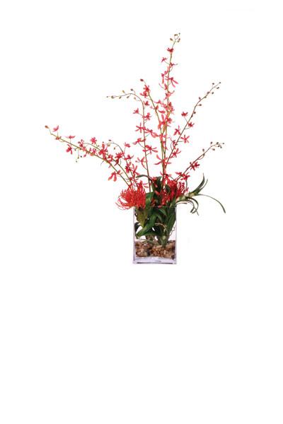 James Vanda Rec Vase Waterlike