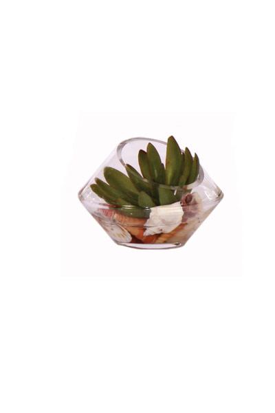 Angle Vase W/ Succ. & Sell Waterlike