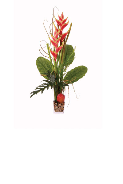 Heliconia Tall Waterlike