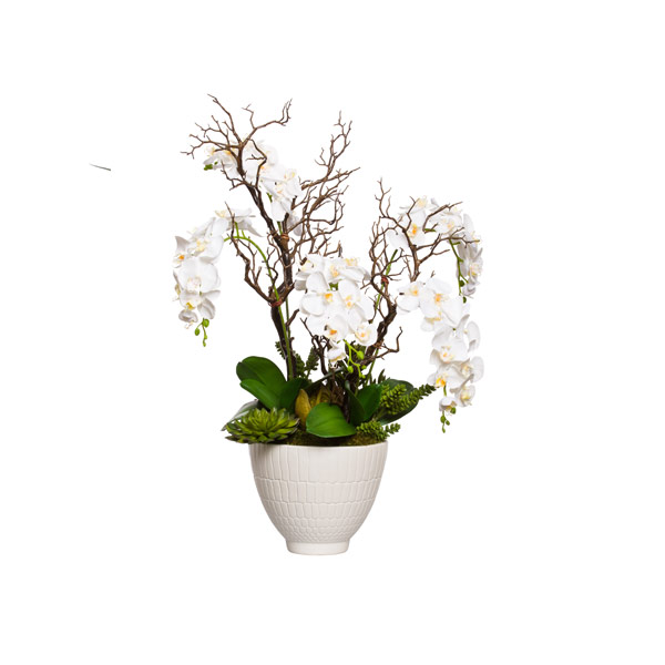 WHITE PHAL/MANZANITA IN WHITE POT