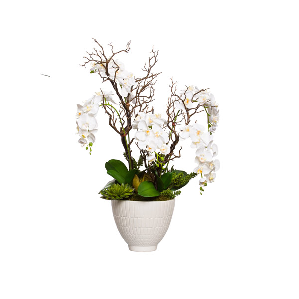 WHITE PHAL/MANZANITA IN SMALL WHITE POT