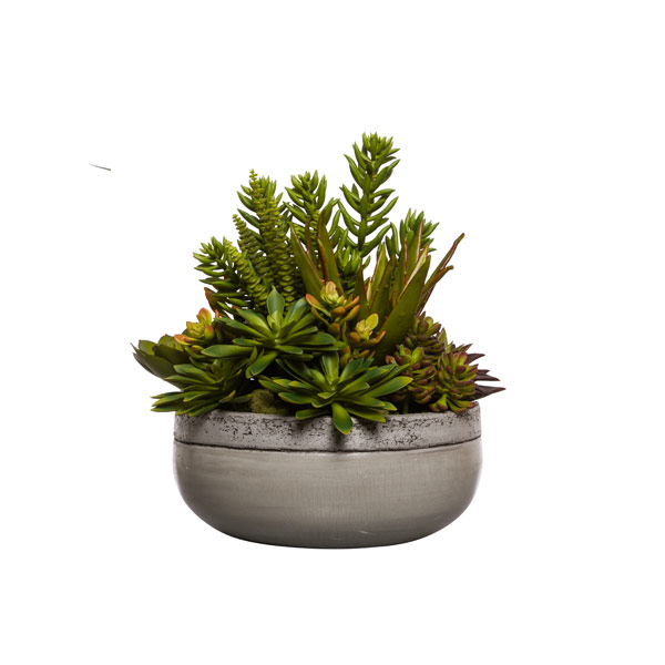 MIXED SUCCULENTS IN GREY BOWL