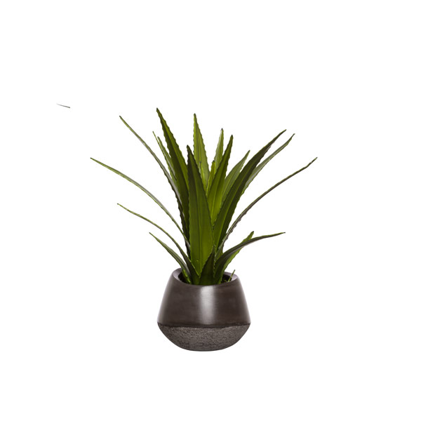 AGAVE BUSH IN BLACK PLANTER