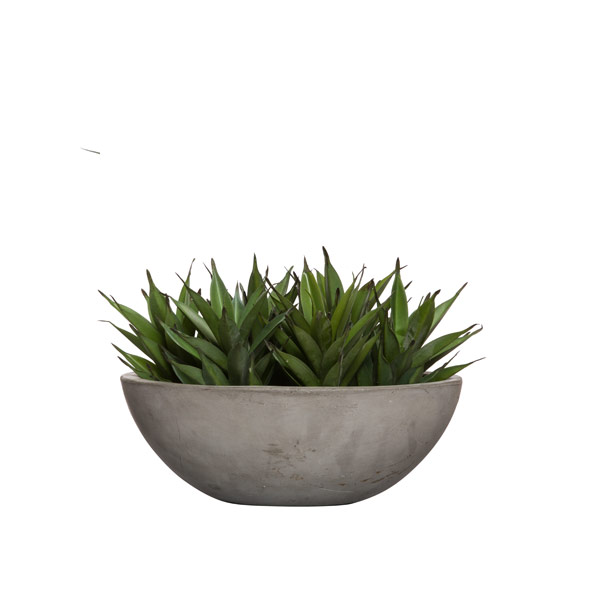 SUCCULENT IN MEDIUM CEMENT BOWL