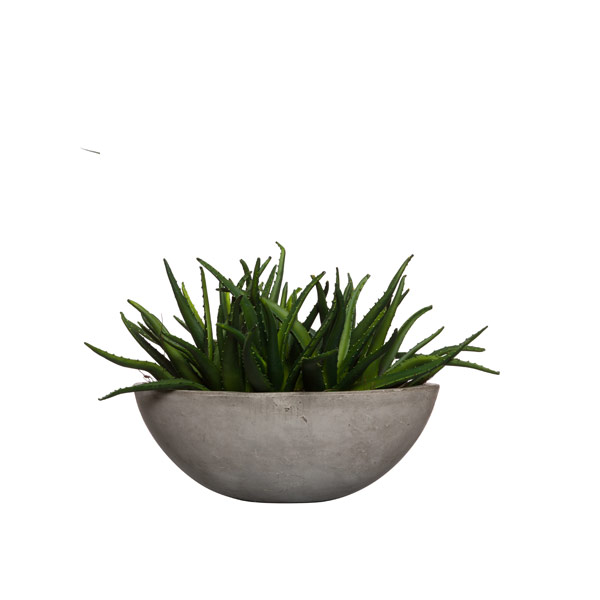 ALOE IN MEDIUM CEMENT BOWL