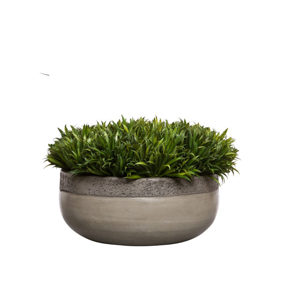 RYE GRASS IN BOWL