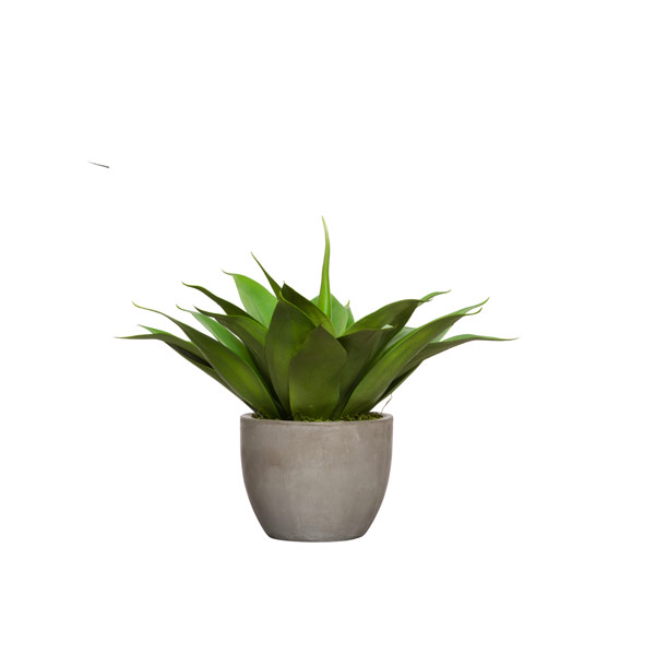 AGAVE IN MEDIUM CEMENT POT