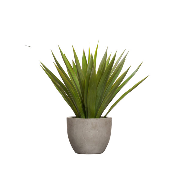 YUCCA IN MEDIUM CEMENT POT