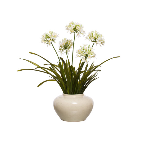CREAM AGAPANTHUS IN OATMEAL BOWL
