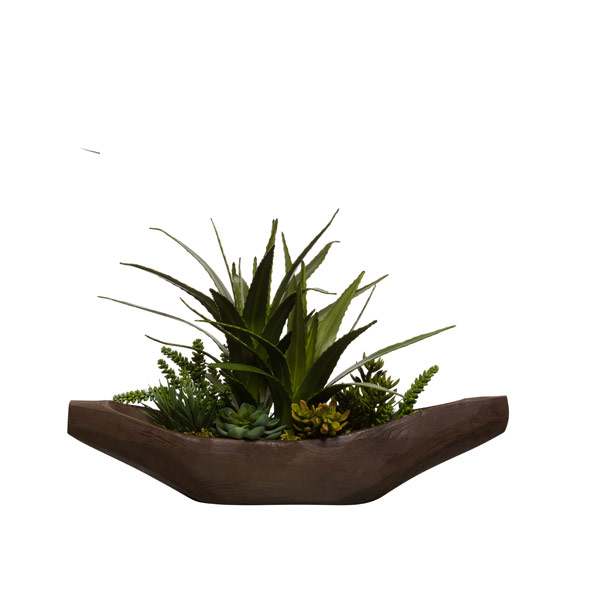 ASST AGAVE/ALOE IN WOOD BOAT