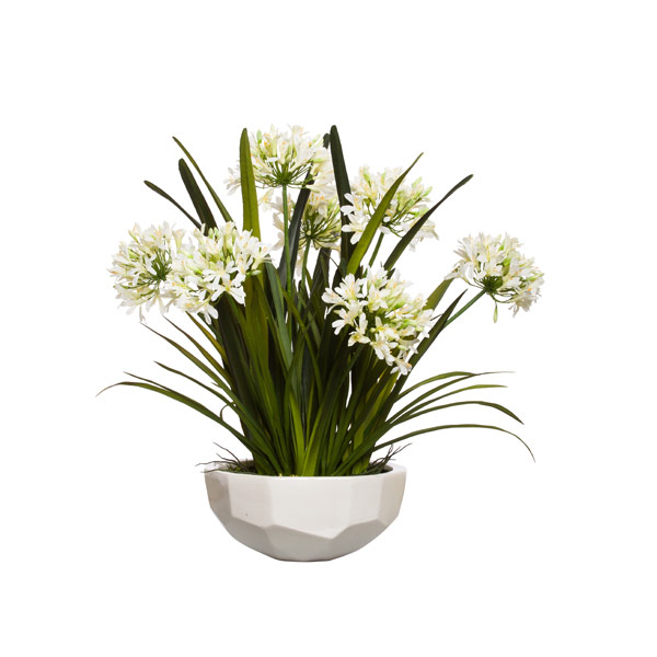 WHITE AGAPANTHUS IN WHITE BOWL