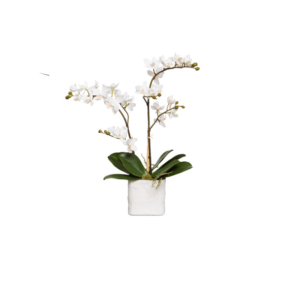 WHITE MINI PHALS IN SMALL WHITE LINEN POT