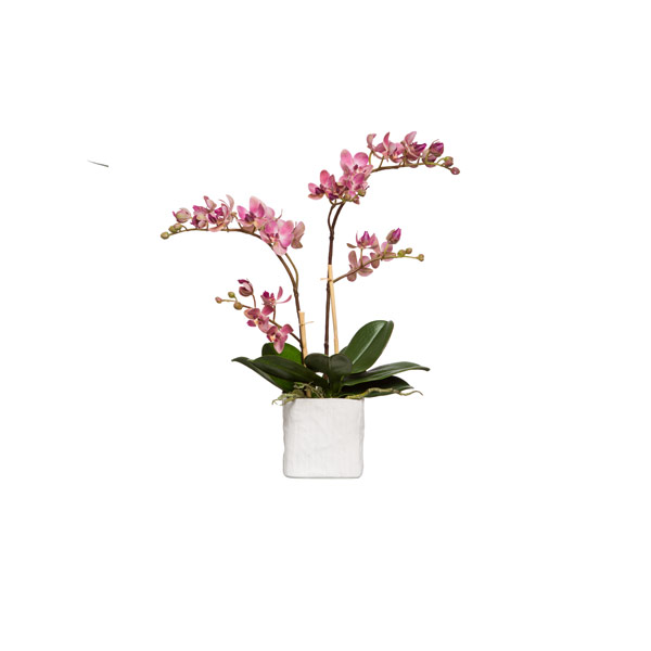 LT PINK MINI PHALS IN SMALL WHITE LINEN POT