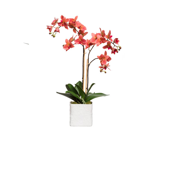 CORAL PHAL IN WHITE LINEN POT
