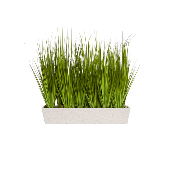 ONION GRASS IN WHITE PLANTER