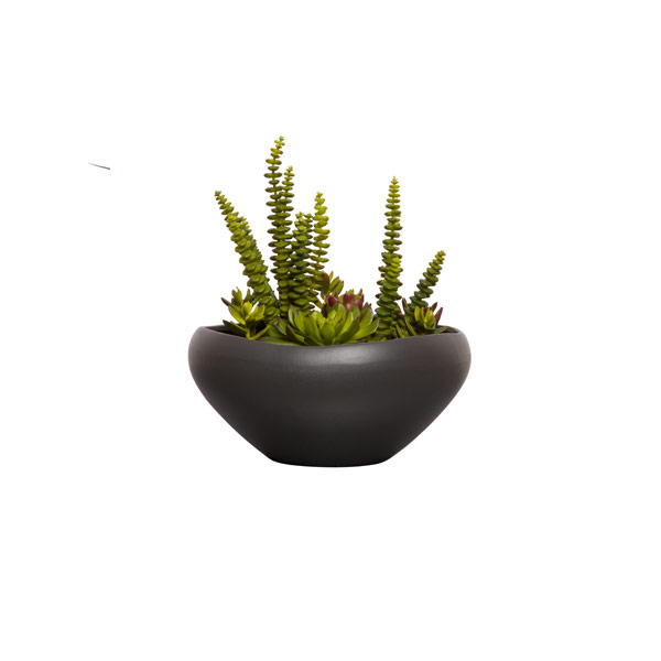 ASST SUCCULENT W/ROCKS IN BLACK BOWL