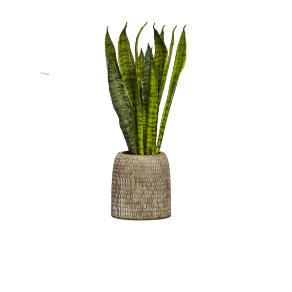 SNAKE PLANT IN BROWN TEXTURED VASE