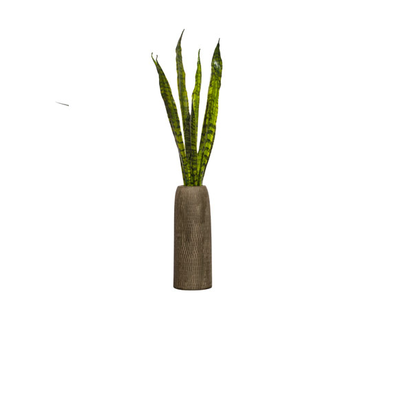 SNAKE PLANT IN TALL BROWN TEXTURED VASE