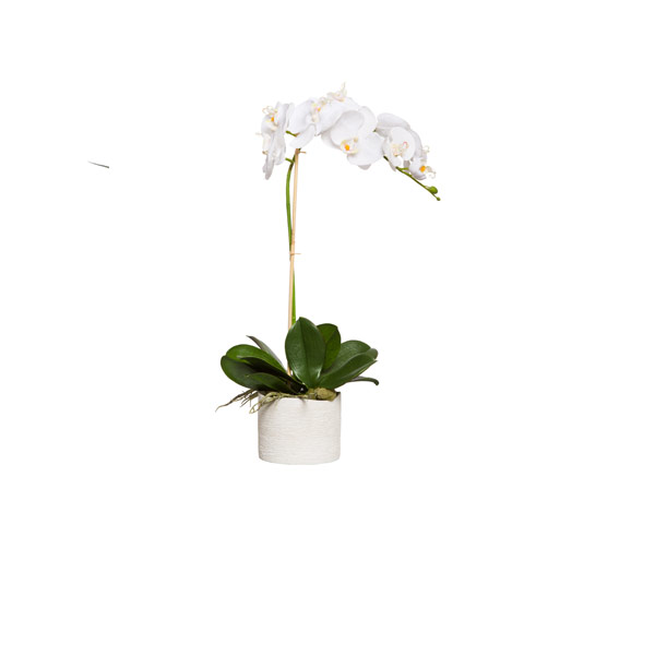 WHITE PHAL IN WHITE ROUND POT