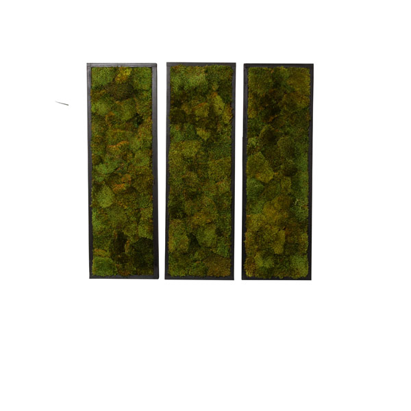 SET X 3 MOOD MOSS WALL HANGING