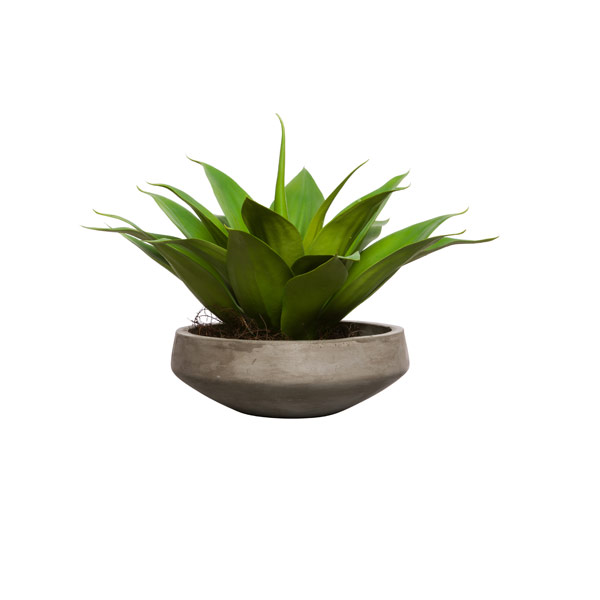 AGAVE IN GREY BOWL