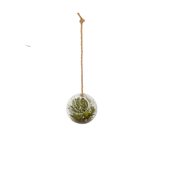 ASST SUCCULENT IN LARGE HANGING ORB WATER LIKE