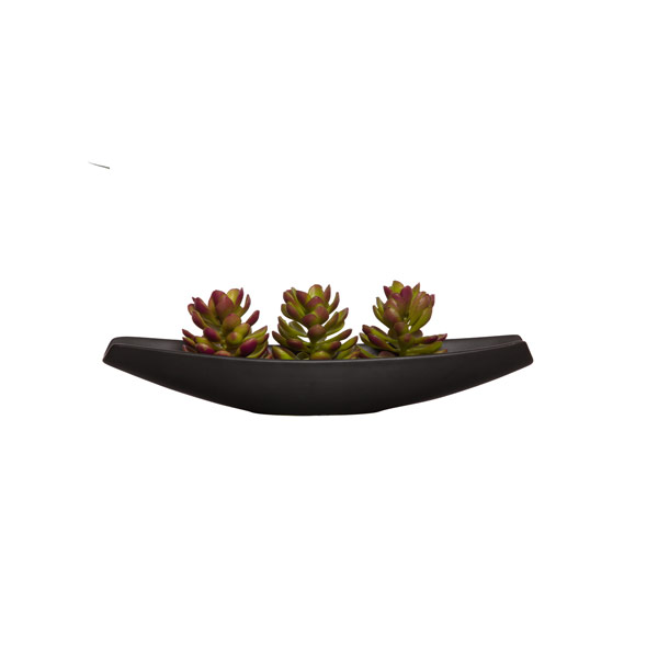 SUCCULENT IN BLACK PLANTER WATER LIKE