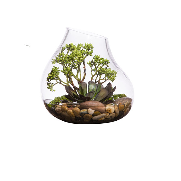 SMALL SUCCULENT WATER LIKE
