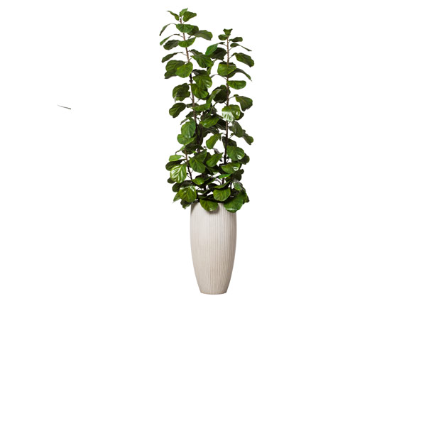 8' SKINNY DLX FIDDLE LEAF FIG IN WHITE POT