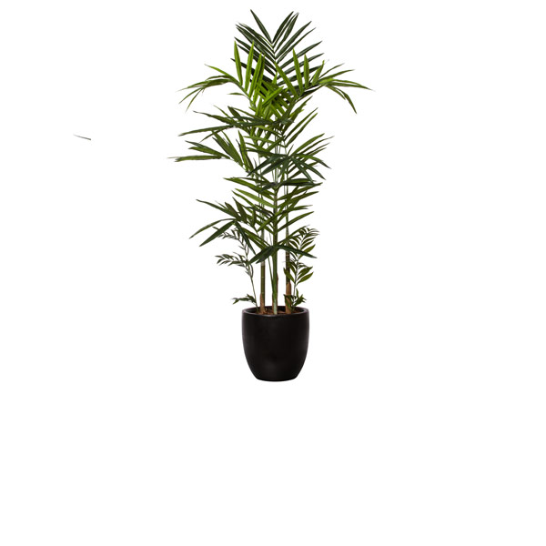 7.5' KENTIA PALM/BASKET