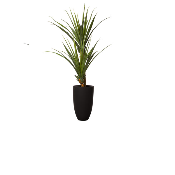 7.5' PANDANUS X 2 IN TALL BLACK POT