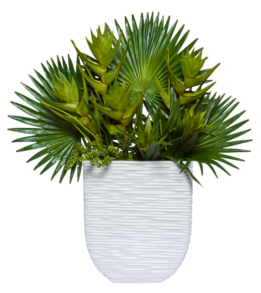 FAN PALM TROPICAL IN WHITE POT