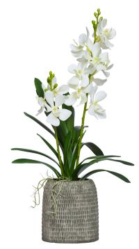 VANDA IN SHORT BROWN VASE