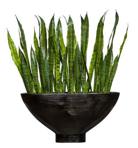 SANSEVERIA IN LARGE OVAL VASE