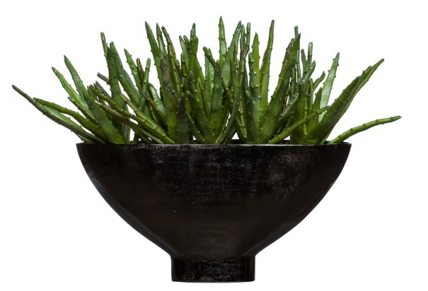 ALOE IN LARGE OVAL VASE