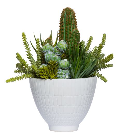 ASST SUCCULENTS WHITE POT