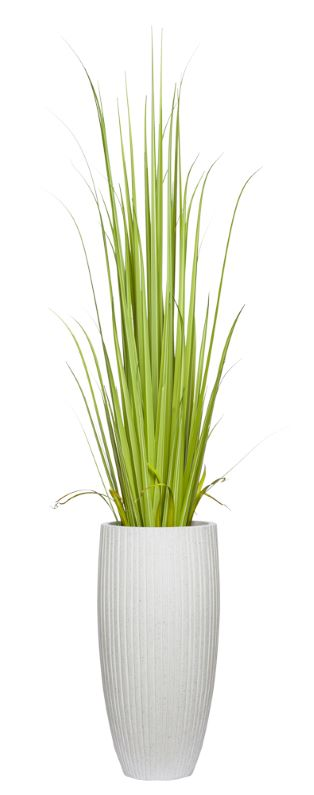 6' GLADIOLUS GRASS IN WHITE POT