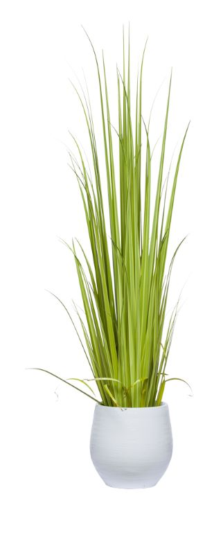 5' GLADIOLUS GRASS IN WHITE BENJI POT