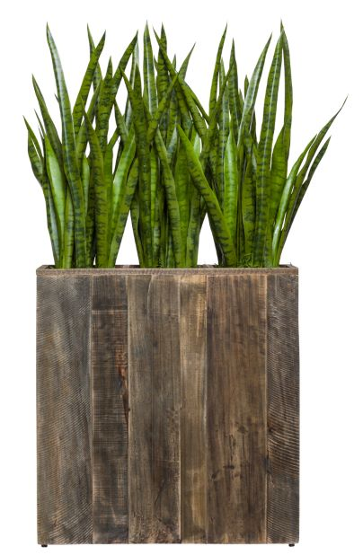 SANSAVERIA IN WOOD PLANTER
