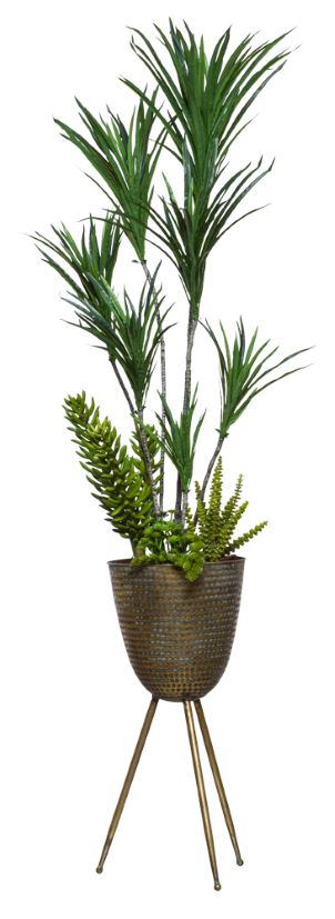 DRACENA COMBO IN BRONZE PLANT STAND